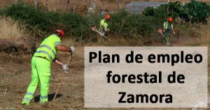 Zamora abre el plazo para inscribirse en el plan de empleo forestal